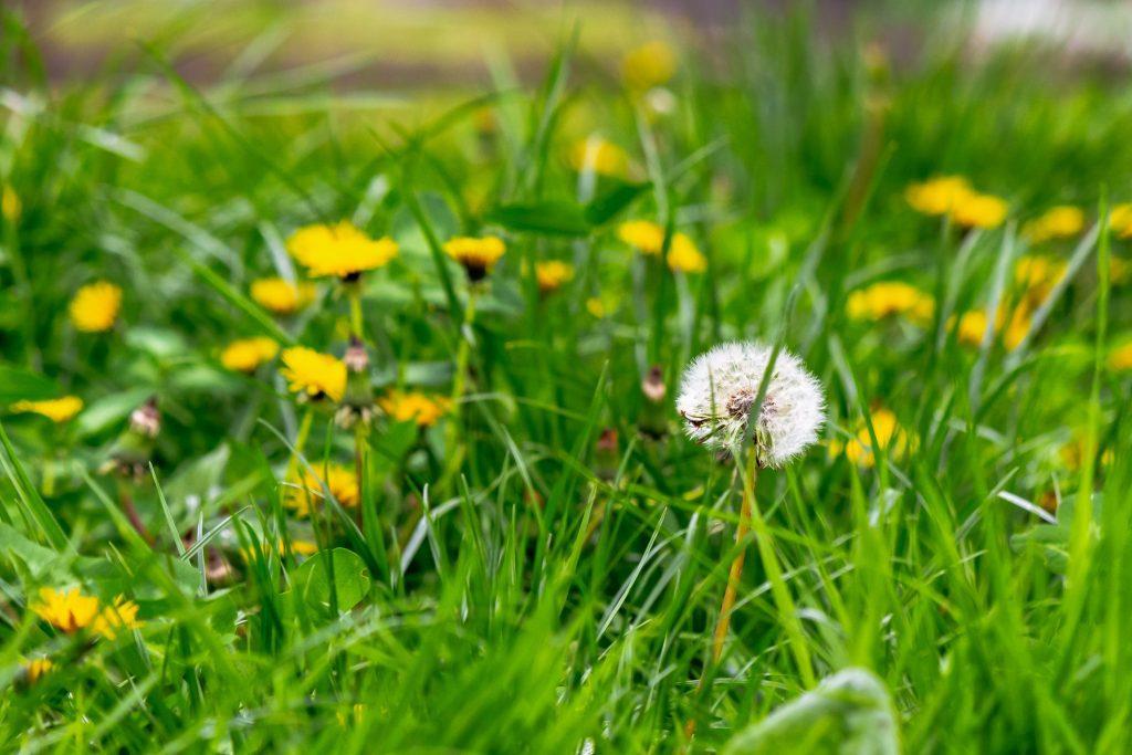weed removal service weeds removed weed control broken arrow ok